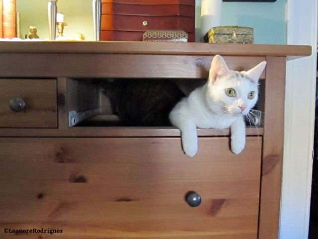 Day 88 - Zelda in drawer